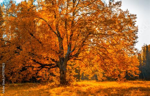 In de dag Oranje eclat Autunm tree in the park, perfect fall scenery