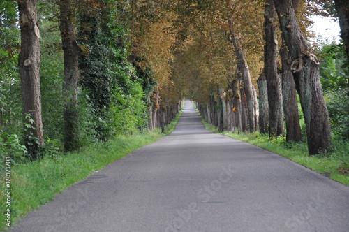 Papiers peints Route dans la forêt aleja drzew 2