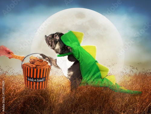 Dog in Costume on Halloween Night Poster