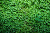 Beautiful ground cover fresh green ferns, natural carpet background with other plant