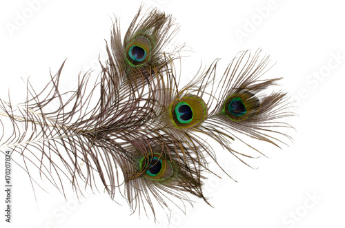 Fotobehang Pauw Peacock feather isolated on white.