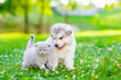 Alaskan malamute puppy and kitten sitting together on green grass. Space for text