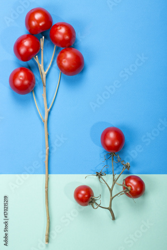 Fotobehang Abstractie Abstract still life with tomatoes and branches on a multi-colored background