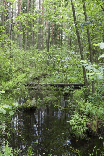 Fotobehang Olijf Forest creek in a midland of Europe
