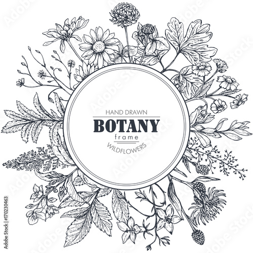 Vector circle frame with herb and wildflower elements