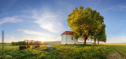 Fotobehang Lente Beautiful spring agricultural wheat field