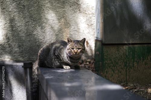 Foto op Canvas Panter cute lovely street cat