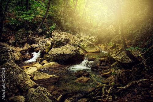 In de dag Zwart Amazing forest landscape.