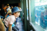 Little kid boy admire different reptiles and fishes in aquarium - 170249205
