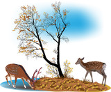 two spotted deers and fall tree