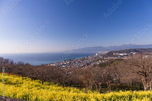 Fotobehang Diepbruine 吾妻山公園、富士山が見える菜の花絶景スポット