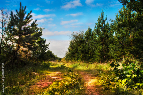 Fotobehang Herfst Rural fall landscape panorama of a green meadow with colorful trees, road and blue sky in autumn