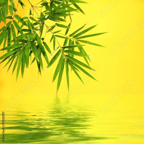 bambou sur fond jaune avec reflets aquatiques