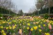 Flores Dallas Jardim Botânico