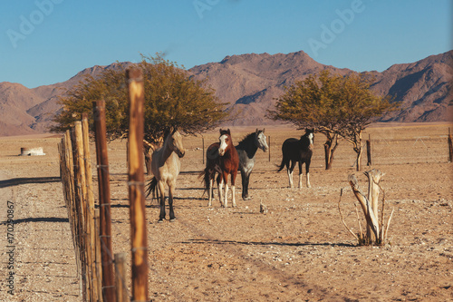 Fotobehang Kameel Horses in the desert