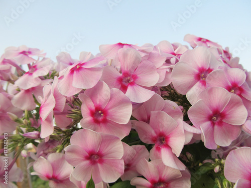 Fotobehang Hydrangea Beautiful floral background with hydrangea