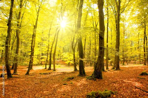 Foto op Plexiglas Geel Autumn forest with sun beam.