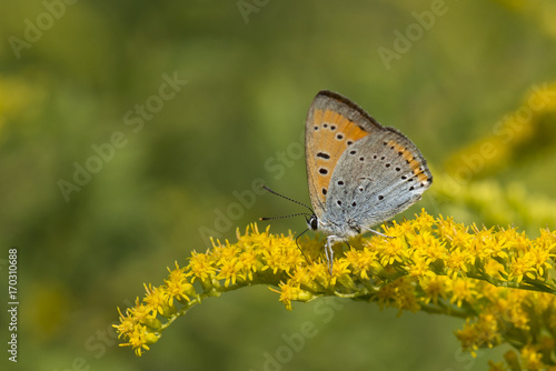 Fotobehang Vlinder Motyl i kwiat