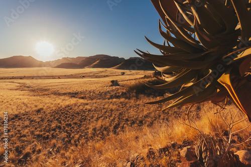 Foto op Plexiglas Chocoladebruin Namibian desert , Veld , Namib