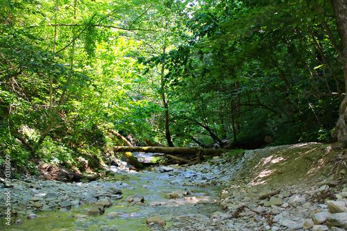 Papiers peints Rivière de la forêt Blue mountains water