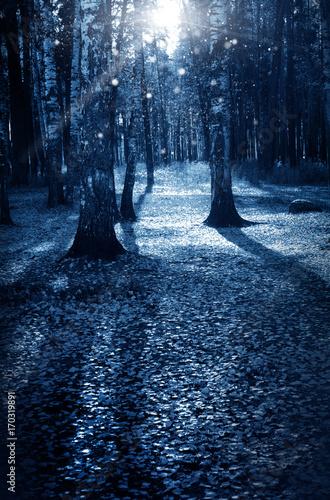 Papiers peints Bleu nuit Night dark forest in fall season, halloween