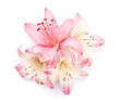 Quadro Pink lily flowers