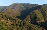 Montagne et forêt de la Tavagna en Haute corse
