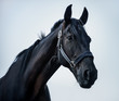 portrait of a young stallion in front of the blue sky - 170342035
