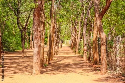 Papiers peints Route dans la forêt Pondichery
