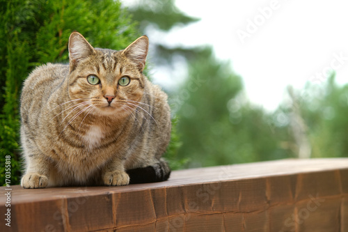Cat sitting on a wooden bench and looking at the camera