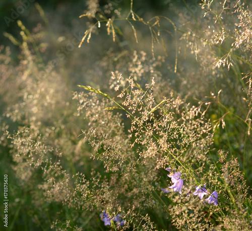 Foto op Plexiglas Gras Dry grass on blurred background.