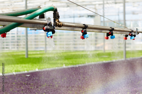 Pipeline with taps for irrigating saplings in hothouse