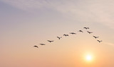 Flock of birds at sunrise or sunset nature concept - 170392200