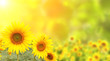 Sunflowers on blurred sunny background - 170397200