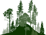 hill with fir trees green forest on white