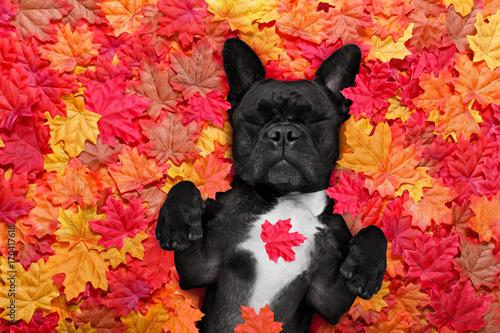 Fotobehang Crazy dog autmn fall leaves dog
