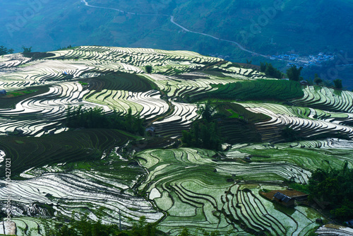 Fotobehang Rijstvelden Terraced rice field in water season by sunset period, the time before starting grow rice in Y Ty, Lao Cai province, Vietnam