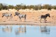 Etosha, Namibia. Wild Zebras at waterhole