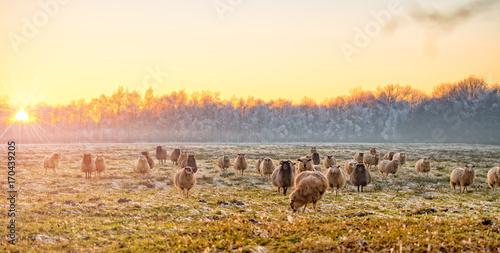 Keuken foto achterwand Oranje Winter in East Frisia
