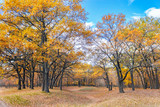 autumn oak forest