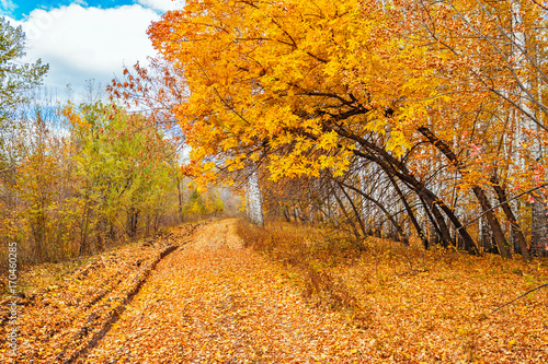 road in a autumn forest