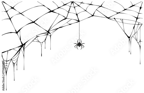 Fototapeta Black spider and torn web. Scary spiderweb of halloween symbol