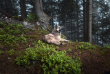 Dog sits in a mystical forest. Vintage look. Dog walking outdoors in a forest - 170465830