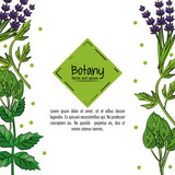 Botany herbs and spices over white background vector illustration graphic design - 170467427