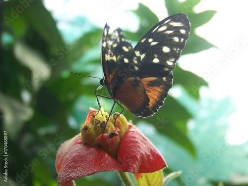 Fotobehang Vlinder papillon
