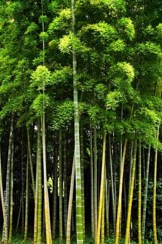 Fotobehang Tokio Bamboo Forest