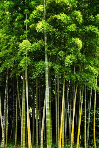 Bamboo Forest Poster
