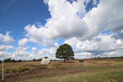 Fotobehang Cappuccino Einsamer Baum in der Heide