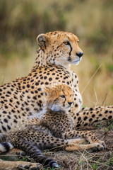 Mother Cheetah and Cub