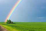 rainbow in the blue clear sky over green tranquil field illuminated by the sun in the country side © Fly Dragon Fly